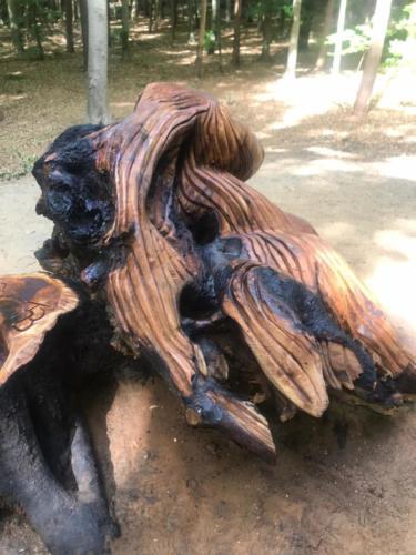 Bosnimf gemaakt voor het Putterbos.